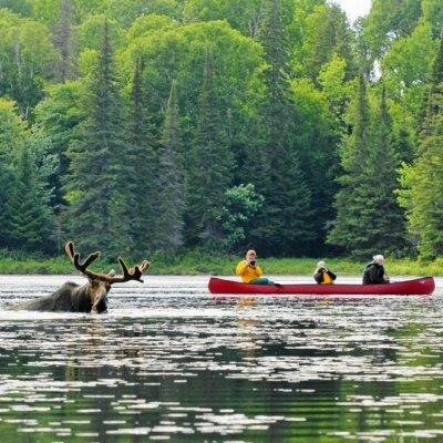 Algonquin Park & Muskoka Lakes Region