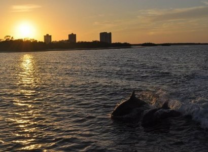 Dolphin and Shelling Sunset Cruise, Fort Myers