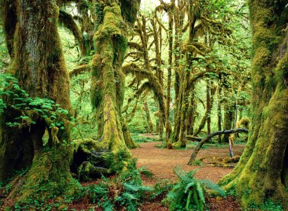 Olympic National Park & Vancouver Island