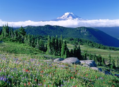 Olympic National Park Day Tour