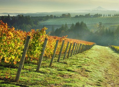 Willamette Valley Wine & Waterfalls Tour