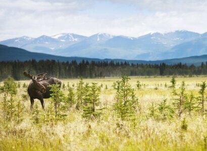 Yukon & Alaska Discovery