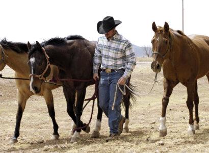 Texas Sights, Sands & Saddles