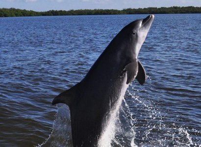 Dolphin and Wildlife Cruise, Fort Myers