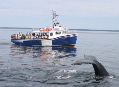 Brier Island Whale & Seabird Cruise