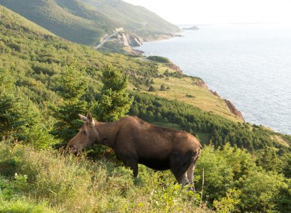 Cabot Trail Sightseeing Tour