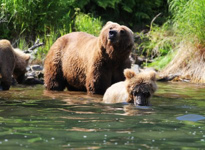 Alaska, Wildlife & Wilderness (includes some camping)