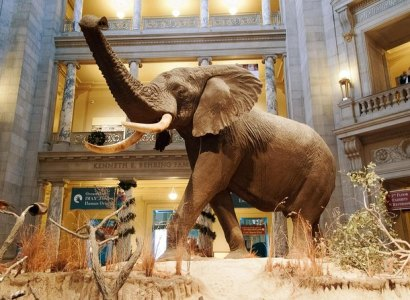 Smithsonian Museum of Natural History Private Tour