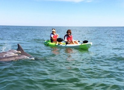 Dolphin Kayak Tours, Virginia Beach