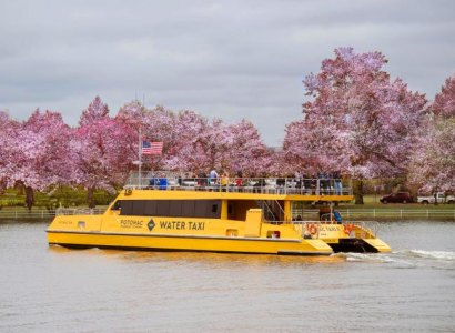 Washington Monuments Cruise to the Cherry Blossoms from Alexandria